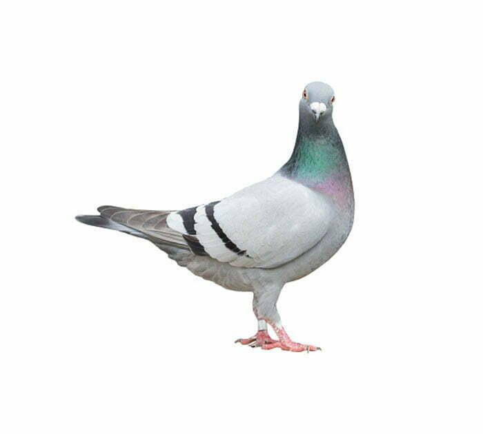 Terminix | Bird Control